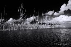 Everglades 7